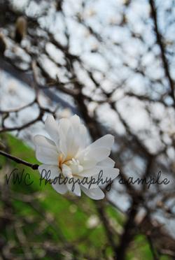 Flower2_3